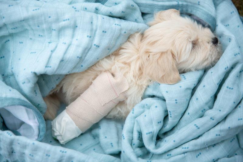 A Puppy with a Broken Leg